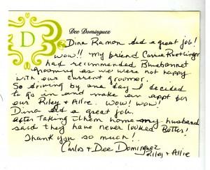 Dina Review
