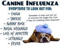 Canine Influenza -What you Need to Know