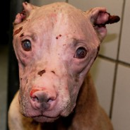 San Antonio Animal Care Services Saves Abuse Victim